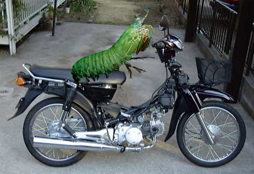 mantis-on-bike.jpg